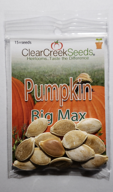 Pumpkin - Big Max (15+ seeds)