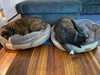 Thank you Angela for sending in the pic of your cute girlies enjoying the beds