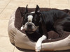 Reversible 'Choccy Snooze' Rectangle Fur Dog Bed