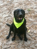 High visible Bright Neon Dog Safety Scarf