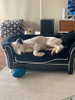 Kye having the best dreams on his Pet obsessed sofa. Soo cute. Looks like he has just been playing with Pet Obsessed floating football too.
