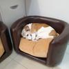 'Chocolate Indulgence' PVC Leather Pet Sofa