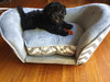 Picture of Frankie on her new sofa. How adorable.