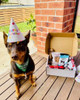 From one of our happy customers. Thank you for sending us the pic of Nala enjoying her bday, so adorable
