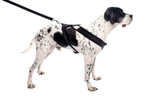 Soft Comfortable Fleece Padded Large Dog Harness