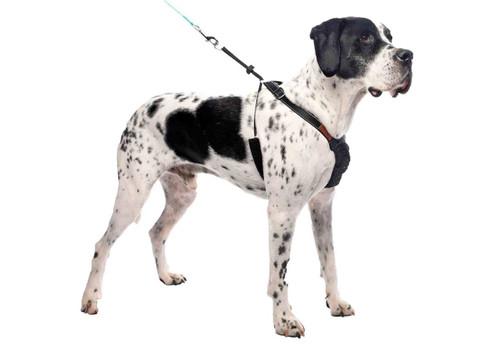 Non-Pulling Sturdy Black Mesh Dog Harness
