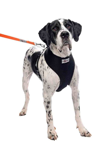 Durable & Lightweight, Breathable Mesh Dog Harness