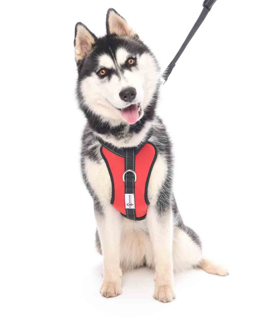 Dog Car Safety Harness with Attachable Seat Belt