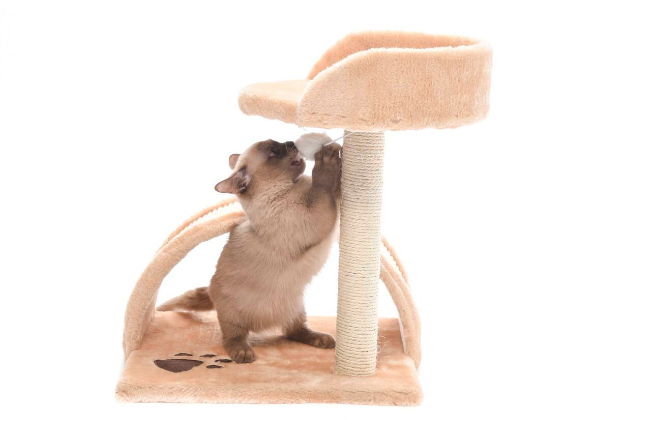 Cat Trees/Scratcher