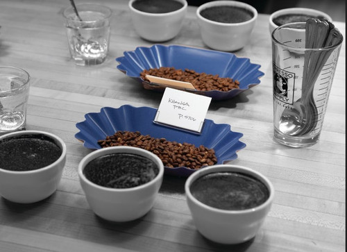 Rattleware Oval Coffee Bean Trays, 1 dozen