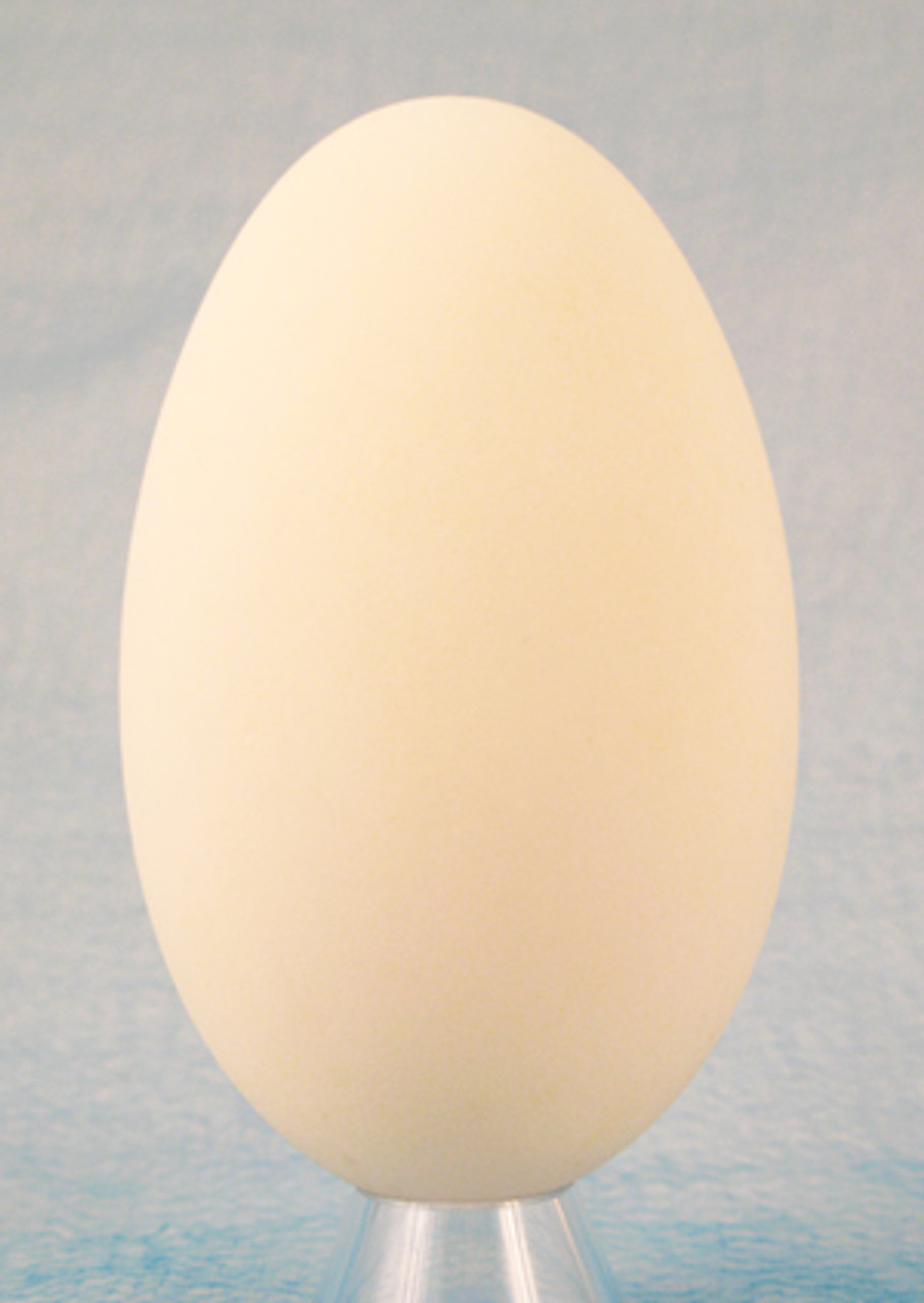 Ukrainian Goose Egg Shell