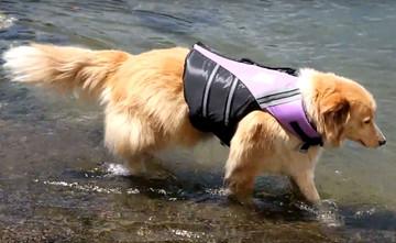 Doggie Life Jacket