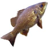 Australian Bass Lures