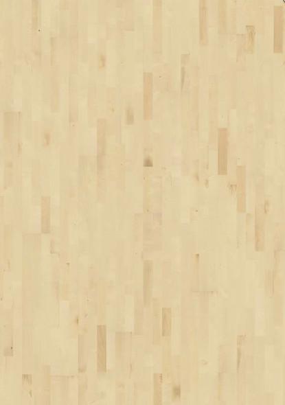 European Maple Gotha 3 strip