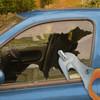 Carbide tip window punch