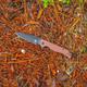 Ausus - Slim Folding Knife