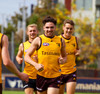 Hawthorn FC adidas gold training jumper 2020