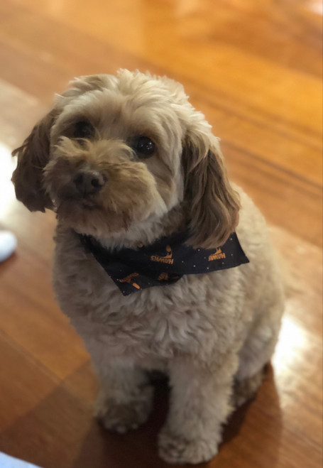 Hawthorn Football Club Dog Bandana