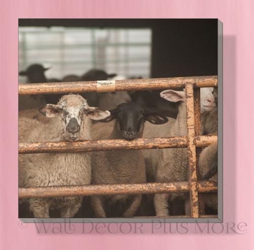 Sheep At Gate 12x12 Canvas Wall Art Print Hanging Farmhouse Wall Decor