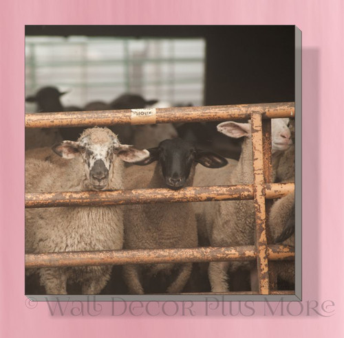 Sheep At Gate 12x12 Canvas Wall Art Print Hanging Farmhouse Wall Decor