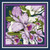 01. Cattleya