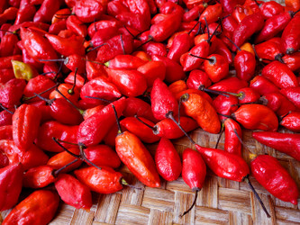 10 Commonly Asked Questions About Ghost Peppers