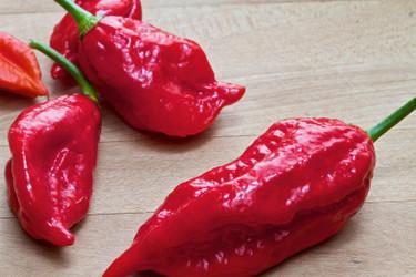 Origin of the Ghost Pepper