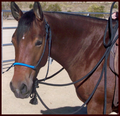 B & H Natural Hackamore with optional Wrapped Noseband in Blue.