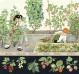 How Does My Fruit Grow? by Gerda Muller