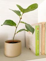 Hasami Porcelain Flower Pot (HP045)