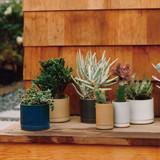 Hasami Porcelain Flower Pot Tray - Matte Natural