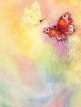 Butterfly World - Postcard