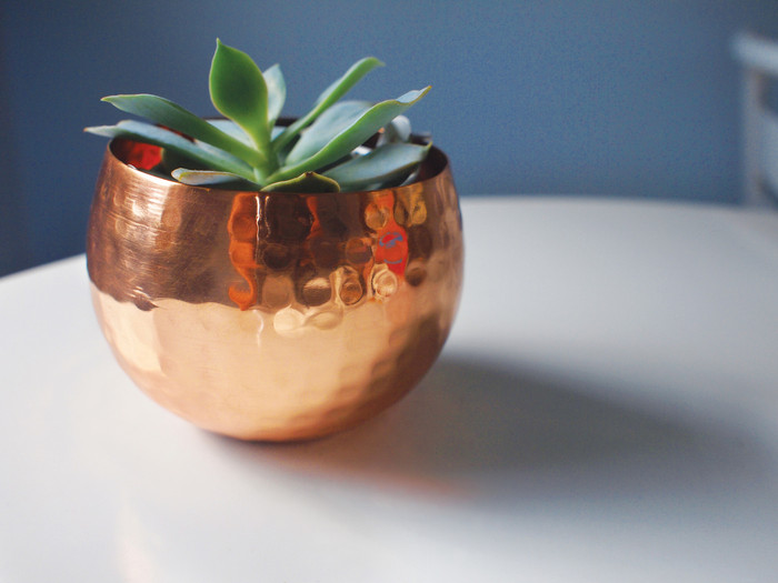 Small hammered copper bowl succulent