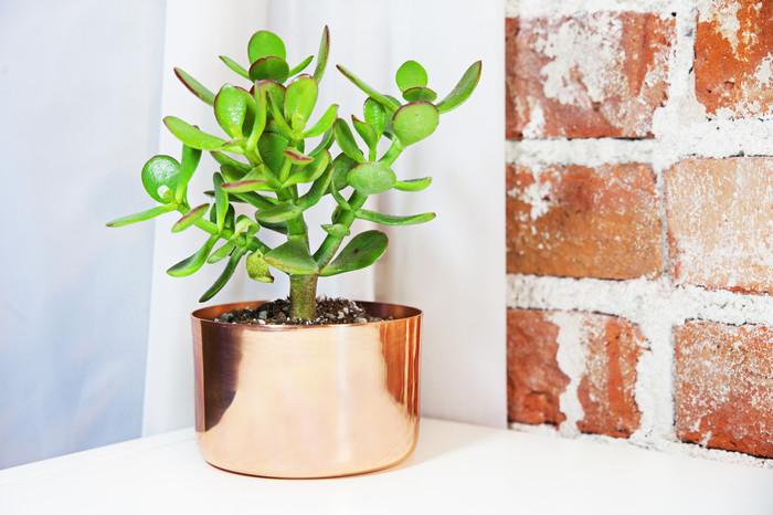"""4"""" Copper Planter"""
