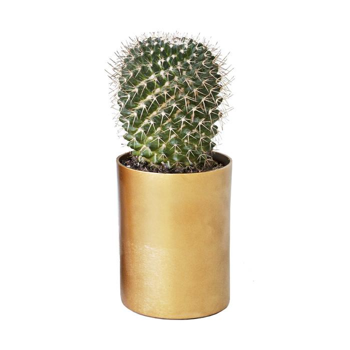 Round brass cactus and succulent planter