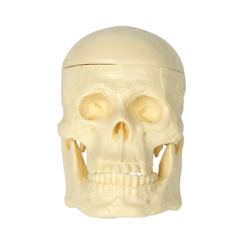 Tiny Tim Skulls Halloween Prop