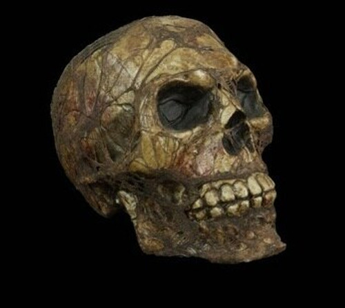 Corpsed Skull Halloween Prop