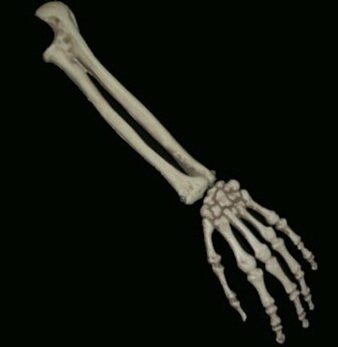 Budget Skeleton Arm Halloween Prop