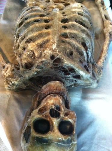Corpsed Full Skeleton Halloween Prop