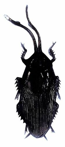 Cockroach Single