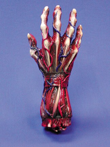 Skinned Right Hand Halloween Prop
