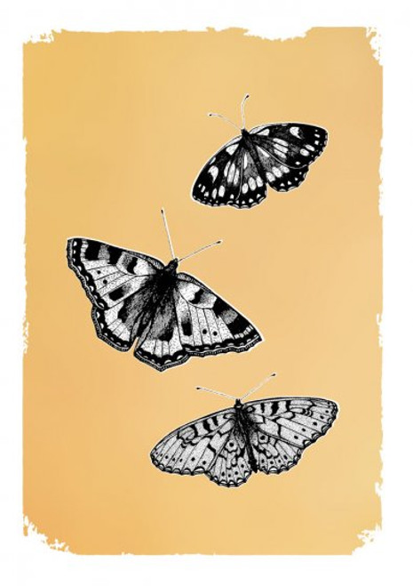 Card - Drawn in Gold Butterflies