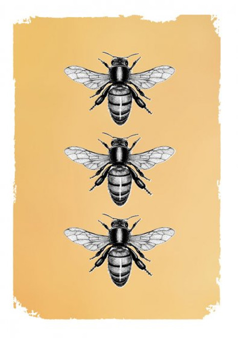 Card - Drawn in Gold Bees
