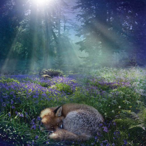 Card - Bluebell Dawn