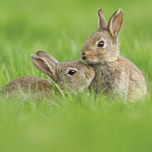Card - Rabbits