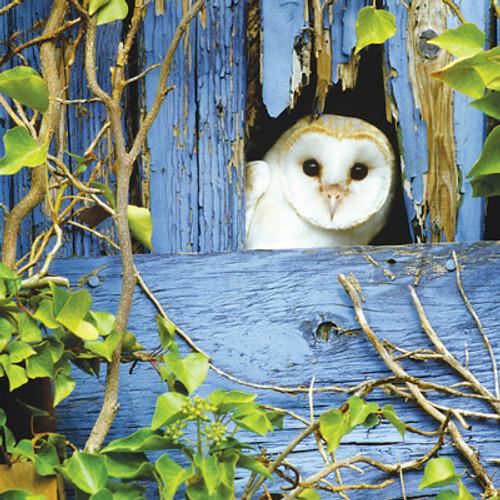 Card - Barn Owl