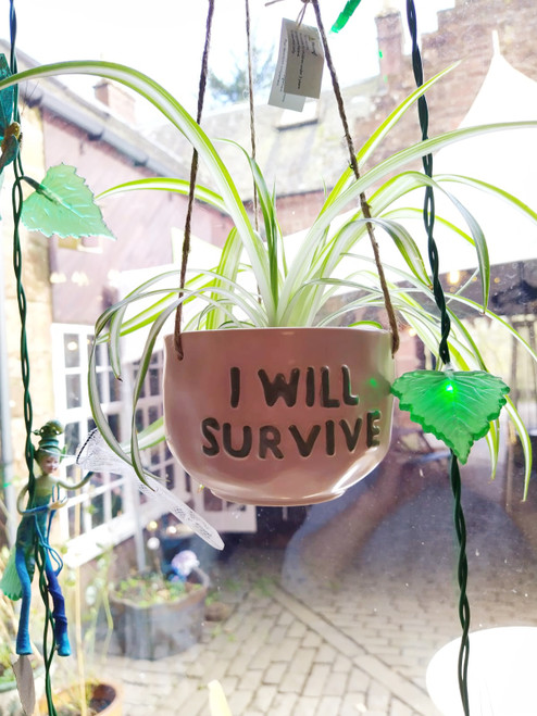 Hanging Planter - I Will Survive