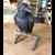 Raven figurine
