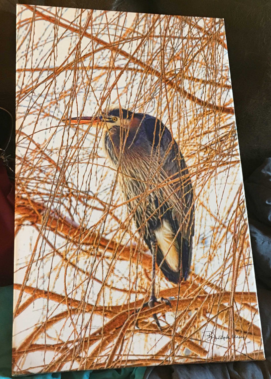 Heron in the Willow Canvas Print 26 In x 16 In x 1.5 In