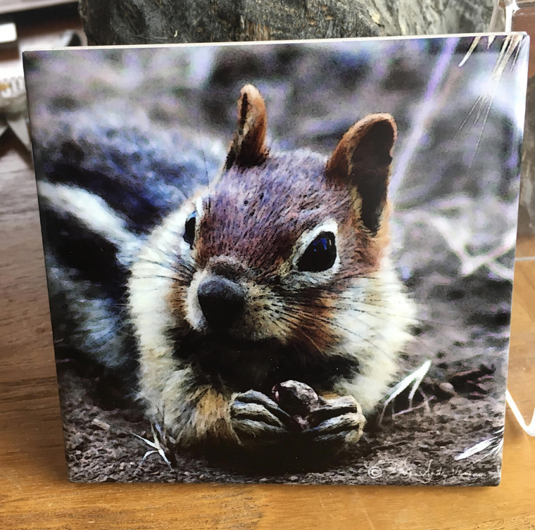 Ceramic Tile - Ground Squirrel 4.25 in x 4.25 in